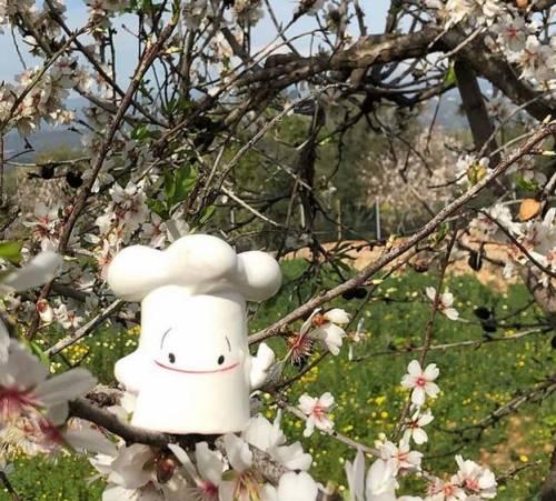 La Mallorca de Los Almendros en Flor   Receta de Gató de Almendra Mallorquín