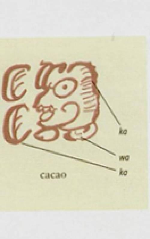El cacao y los mayas (1ª parte)